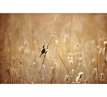 Joyful, Joyful, All Rejoicing Photographic Print