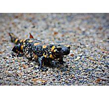 Salamander Photographic Print