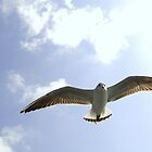 Bird Flying 1 by Dhaval Shah