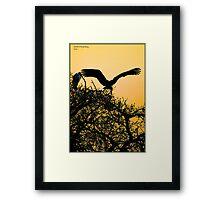 stork sunset! Framed Print