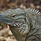 Portrait of a Blue Iguana by KAREN SCHMIDT