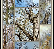 Treetop Montage - Springtime Against the Skies by MotherNature