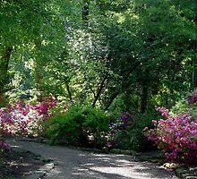 Azalea Walk by Carolyn  Fletcher