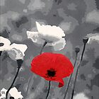One Red Poppy by Samitha Hess