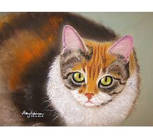 Sweetheart Kitty Photographic Print