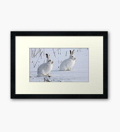 Hare There! North American Snowshoe Hare Framed Print