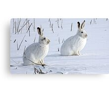 Hare There! North American Snowshoe Hare Canvas Print