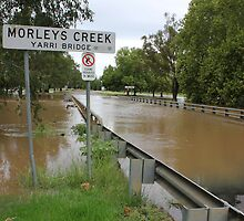 Flooded Creek by Charles Kosina