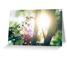 Warm Sunshine II Greeting Card