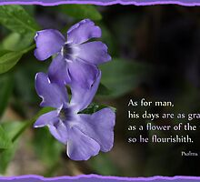 Psalm 103:15 by Vickie Emms