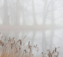 Reeds and trees in the fog by BeardyGit