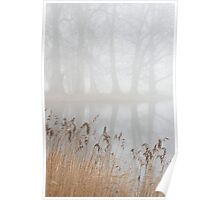 Reeds and trees in the fog Poster