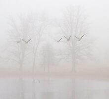 Flying birds in the fog by BeardyGit
