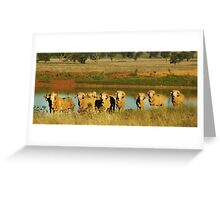 Merino Rams at Water Greeting Card