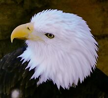 Eagle Head by pcfyi
