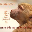 Nature Photography Challenge Banner by César Torres