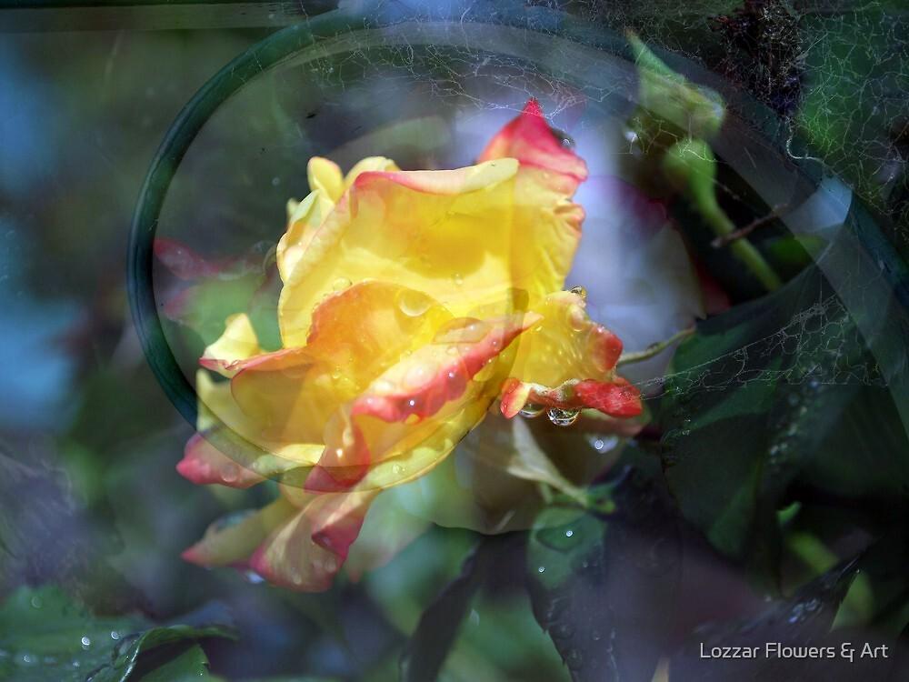 My Refuge by Lozzar Flowers & Art