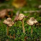 Miniature fungi by Rosalie Dale