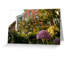 Flowers in a DC Neighborhood Greeting Card