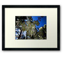 Yucca Plant Flower Spike Framed Print