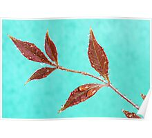 Red Leaves with Dew Drops 2 Poster