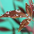 Red Leaves with Dew Drops 3 by barnabychambers