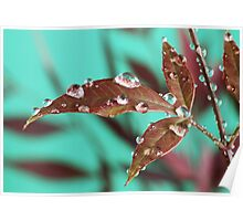 Red Leaves with Dew Drops 3 Poster
