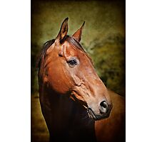 Portait of a Horse #8 Photographic Print