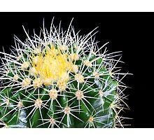 golden barrel cactus Photographic Print