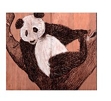 Panda Bear by Tarnya  Burke