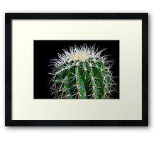 golden barrel cactus 2 Framed Print