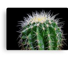 golden barrel cactus 2 Canvas Print