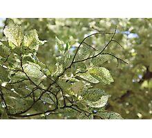 Nature Grain Photographic Print