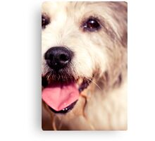 Peggie Nose Canvas Print