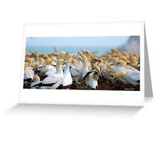 A GANNET GATHERING - CAPE GANNET - {Morus capensis} Greeting Card