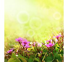 Spring Time Morning Photographic Print