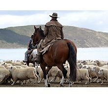 Herding sheep on Castlepoint Beach Photographic Print