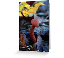 Mushroom Kingdom (3203) Greeting Card
