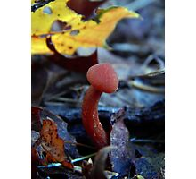 Mushroom Kingdom (3203) Photographic Print