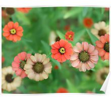 Butterfly View - Red Daisy Flowers Poster