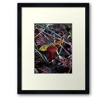 Mushroom Kingdom (3197) Framed Print