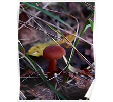 Mushroom Kingdom (3197) Poster