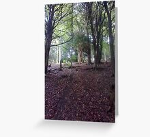 Woodland walks Greeting Card