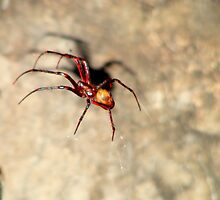 Chedder cave Spider. by Livvy Young
