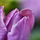 Peaceful Purple... by Bob Daalder