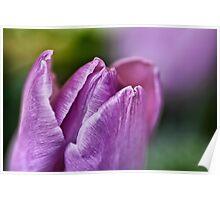 Peaceful Purple... Poster