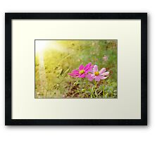 Morning Light 3 Framed Print