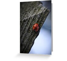 ladybird overwintering Greeting Card