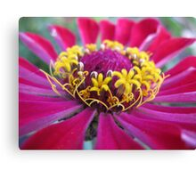 Flowers within a Flower - macro Canvas Print