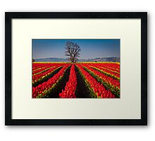 Tree in Sea of Red Framed Print